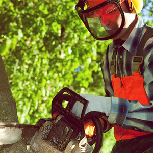 chainsaw safety training at ABCB First Aid in Nanaimo, BC